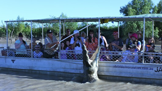 Adelaide river croc cruises enable you to get up close and personal with big beast and see the famous croc Brutus